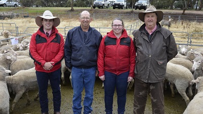 Elders Bordertown livestock agent Wade Broadstock with Hannaton clients Gary Lock, Micalea Lock and Elders Bordertown Brenton Henriks pictured with the sale topping pen.