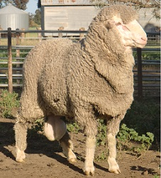 Jet Star shows real sire attitude